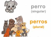 Palabras en singular y plural.